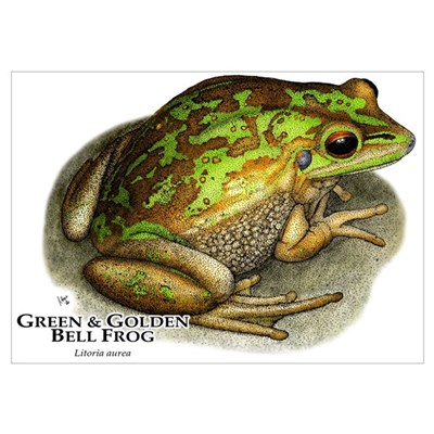 Green & Golden Bell Frog Poster