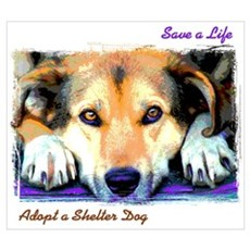 Save a Life - Adopt a Shelter Framed Print