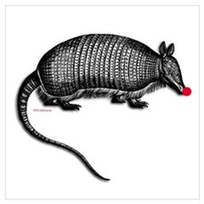 armadillo Canvas Art