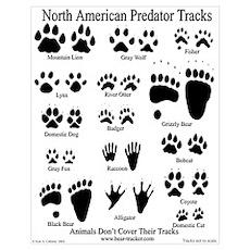 North American Predator Track Poster