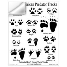 North American Predator Track Wall Decal