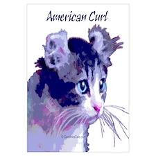 American Curl