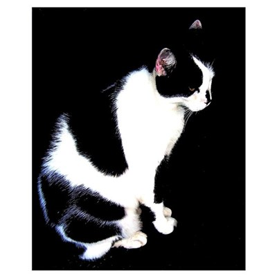 Black and White Cat Canvas Art