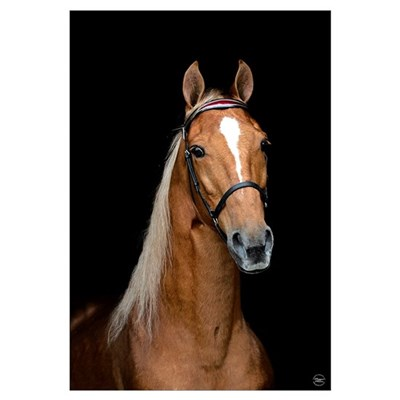 Sorrel Horse Canvas Art