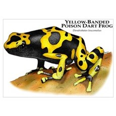 Yellow-Banded Poison Dart Fro Poster