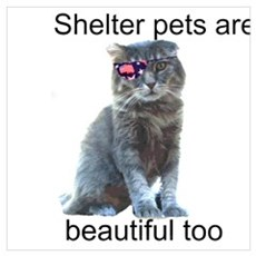 Shelter Pets Poster