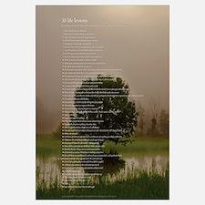 All 50 (tree)