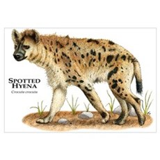 Spotted Hyena Framed Print