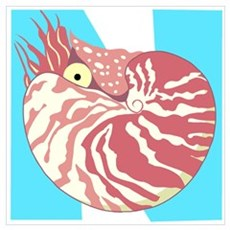 N is for Nautilus Poster