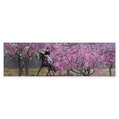 Spring Half Pass Dressage Horse Bumper Bumper Sticker