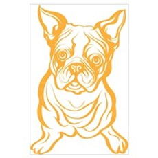 Boston Terrier Poster