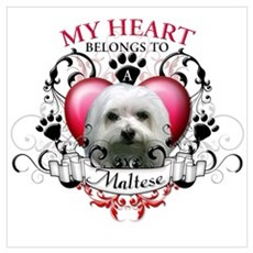 My Heart Belongs to a Maltese Poster