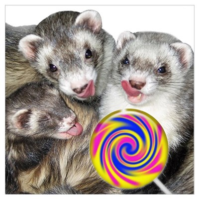 Ferrets with Lollipop Canvas Art