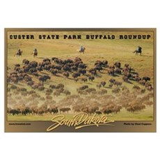 Custer State Park Buffalo Roundup Framed Print