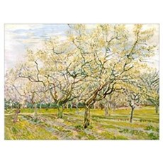 Van Gogh The White Orchard Framed Print