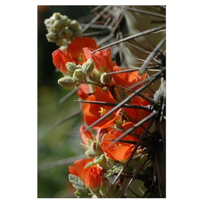 Mallow & Cactus Poster