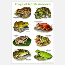 Frogs of North America