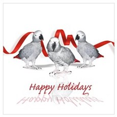 african grey parrot holiday Poster