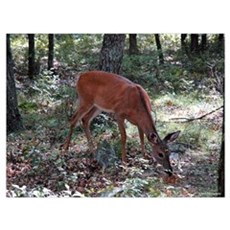 Deer 6 Poster