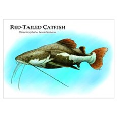 Red-Tailed Catfish Poster