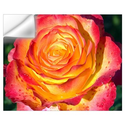 Tequila Sunrise Rose Wall Decal