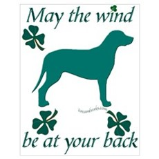 Swiss Mountain Dog and Shamrocks Poster