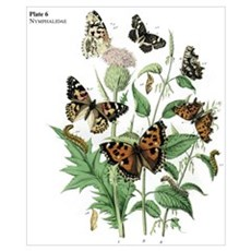 Butterfly 17 Poster