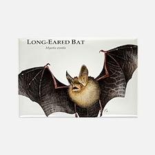 Long-Eared Bat Rectangle Magnet