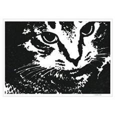 'Wes' the Cat (15x19) Poster