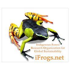 Madagascar Poison Frog Poster