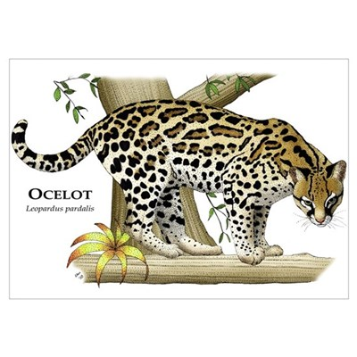 Ocelot Poster