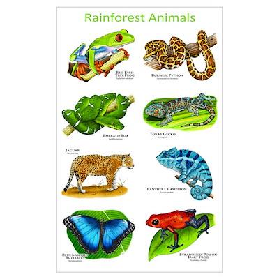 Rainforest Animals Poster