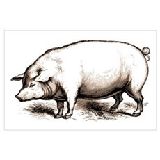 Victorian Pig Poster