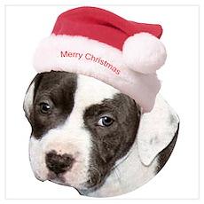 Christmas American Pit Bull Terrier Pr Poster