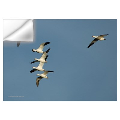 Snow Geese Wall Decal