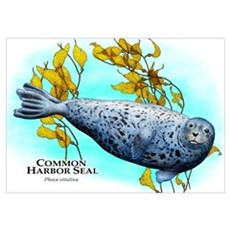 Common Harbor Seal Poster