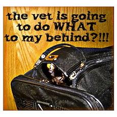 Kitty at Vet's Poster