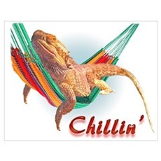 Bearded Dragon Chillin Poster