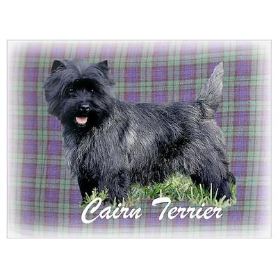 Cairn Terrier Tartan Poster