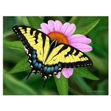 Tiger Swallowtail Canvas Art
