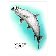 Atlantic Tarpon Poster