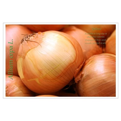 Yellow Onion Poster