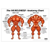 Anatomy chart Posters