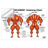 Anatomy chart Wall Decals