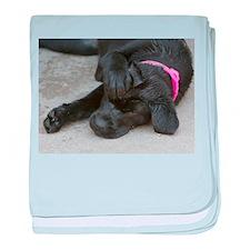 Ahhhh no puppy baby blanket