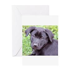 Princess Puppy Greeting Card