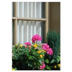 Floral Window Poster