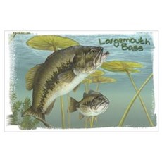 Largemouth Bass, Fish Poster
