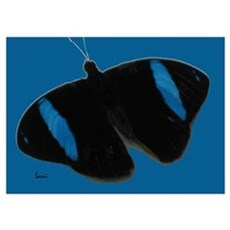 Black With Blue Butterfly Poster