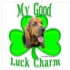 Bloodhound Irish 1 Canvas Art